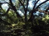 DeRidder land for sale,  55 acres Cile Church Loop, DeRidder LA - $330,000