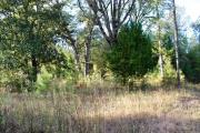 Anacoco land for sale,  650 Crescini, Anacoco LA - $199,900