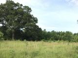 DeRidder land for sale,  Bill White Rd, DeRidder LA - $40,000