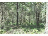 land for sale,  Bob Long Road,  LA - $27,500