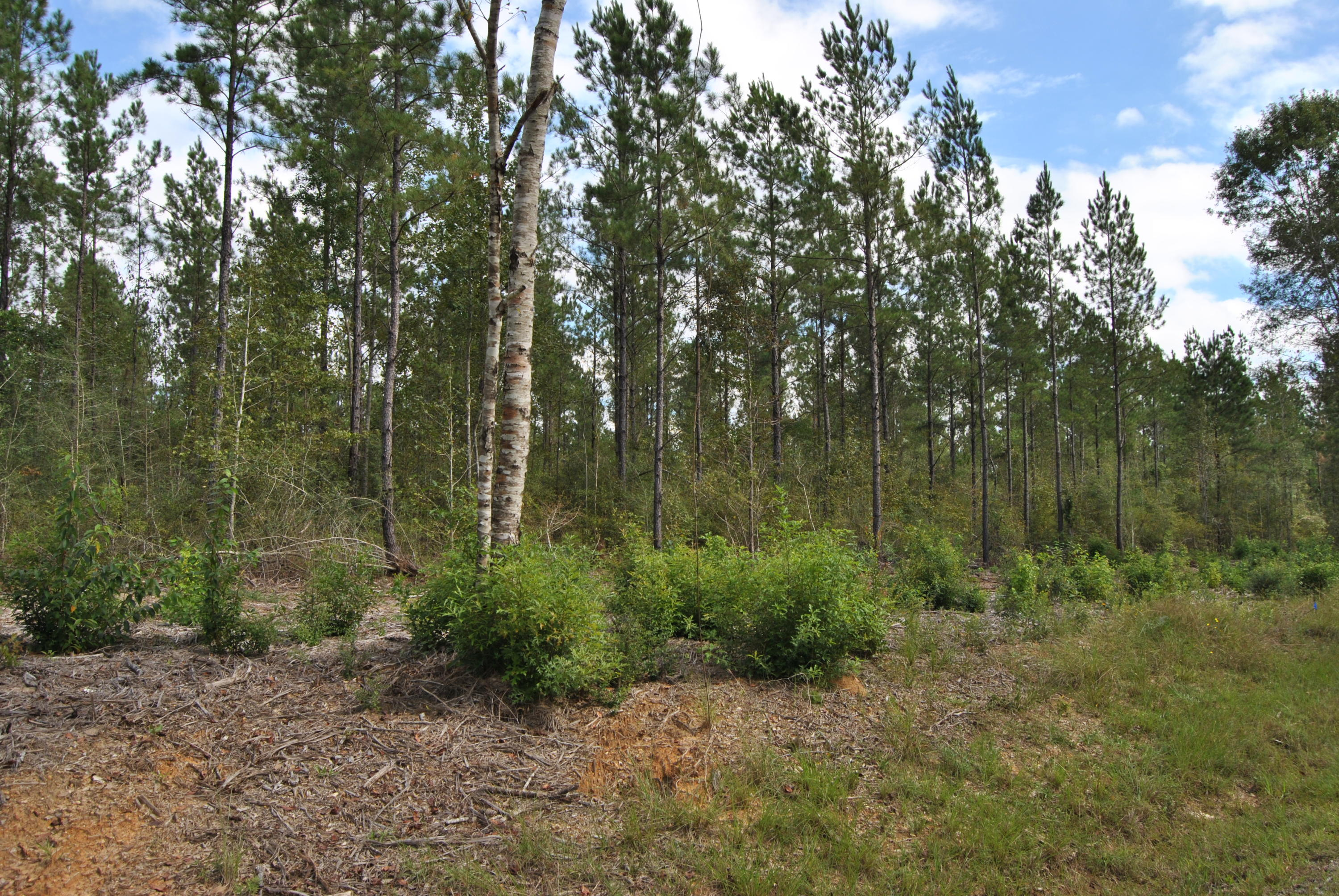 Reeves land for sale,  Camp Pearl Loop North, Reeves LA - $66,500