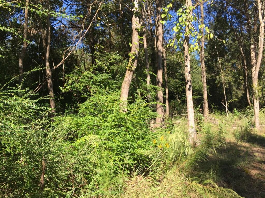 DeQuincy land for sale,  E Holbrook Park Rd, DeQuincy LA - $49,500