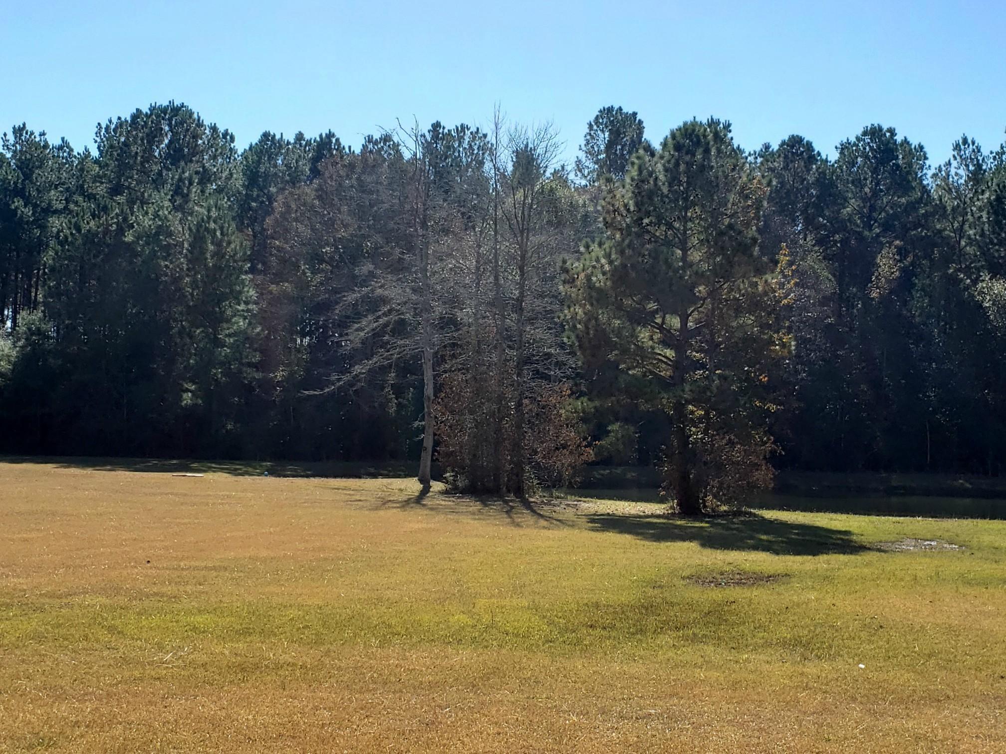 Leesville land for sale,  Eagle Point Rd. (Lot 19), Leesville LA - $24,000