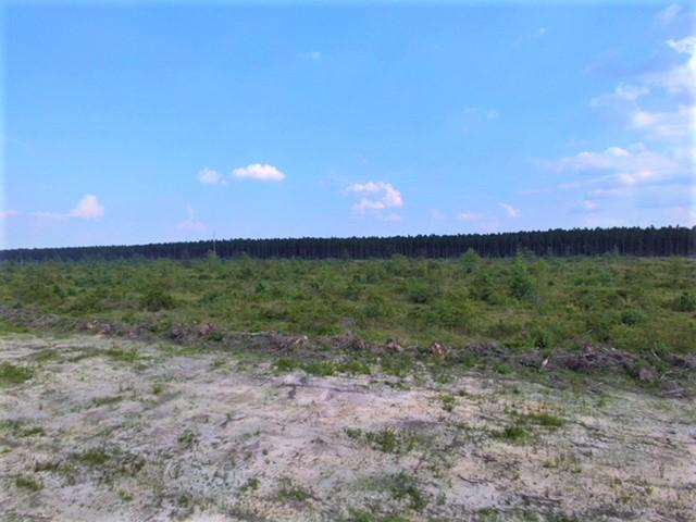 DeRidder land for sale,  Elengton Rd, DeRidder LA - $47,000