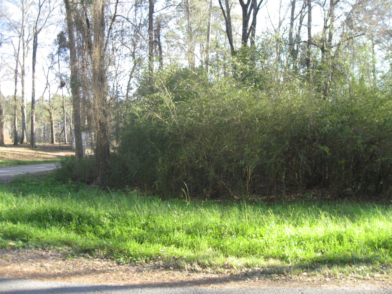 Merryville land for sale,  FRAZAR, Merryville LA - $15,000