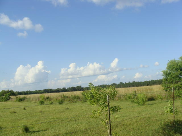DeRidder land for sale,  Grantham Rd, DeRidder LA - $52,000
