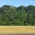 Leesville land for sale,  Hwy 171 Vacant Land 100 Acres, Leesville LA - $449,900