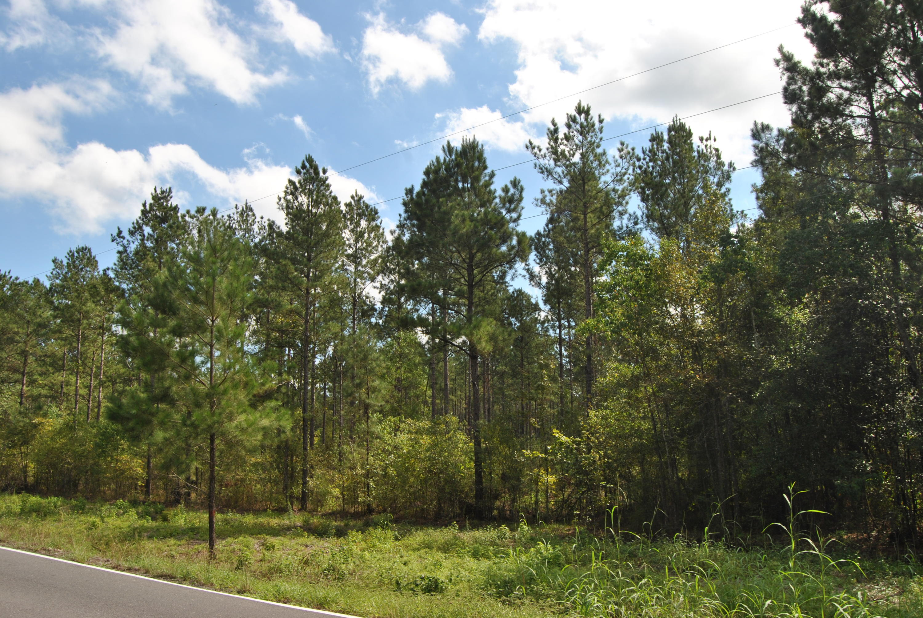 Kinder land for sale,  Hwy 383, Kinder LA - $32,000
