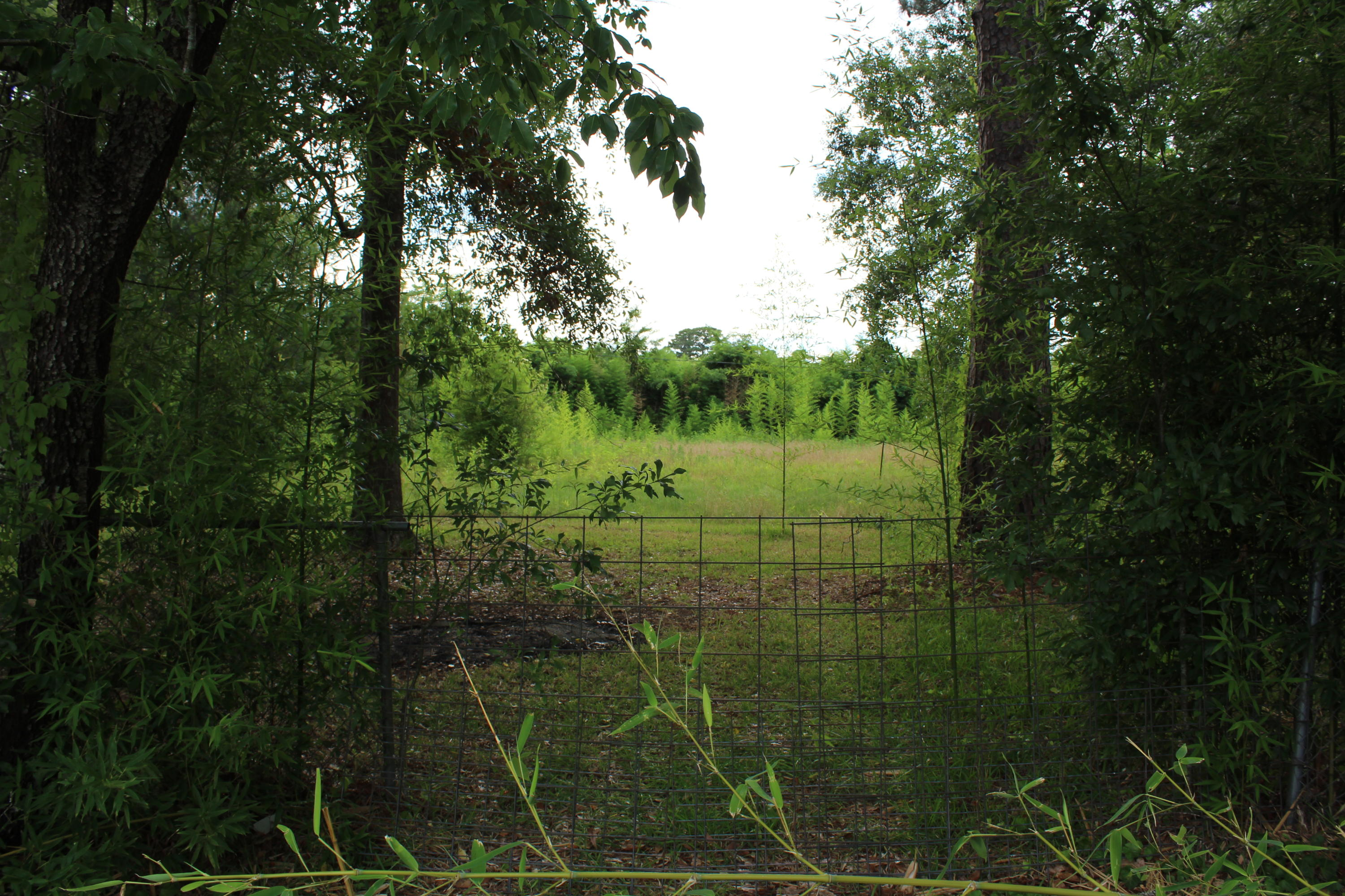 DeRidder land for sale,  Lemonte Ave, TBD, DeRidder LA - $25,000