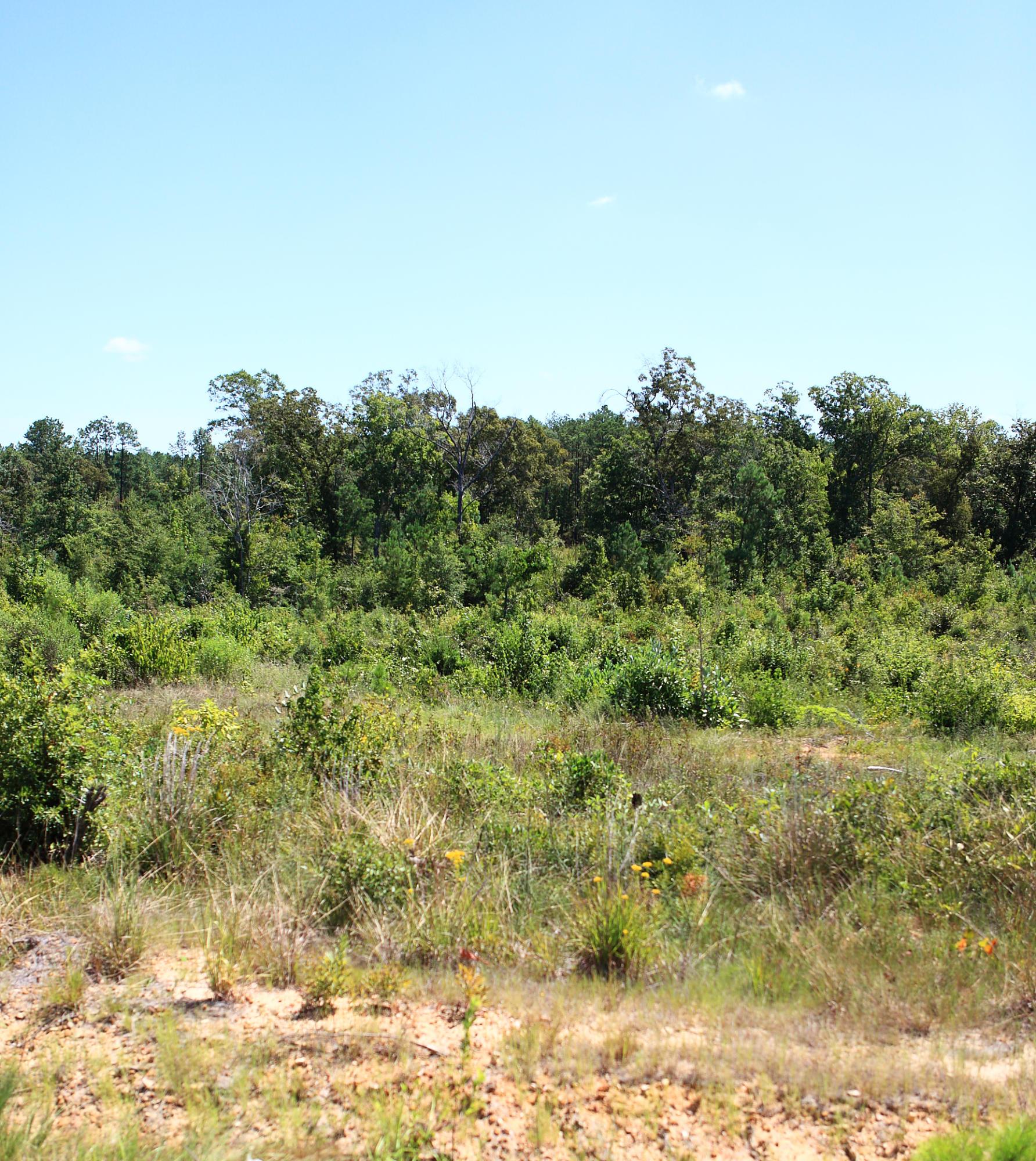 Leesville land for sale,  Lot 21 LeBleu Settlement, Leesville LA - $16,500