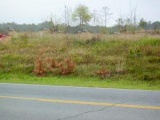 Leesville land for sale,  Lot 3  Entrance, Leesville LA - $165,000