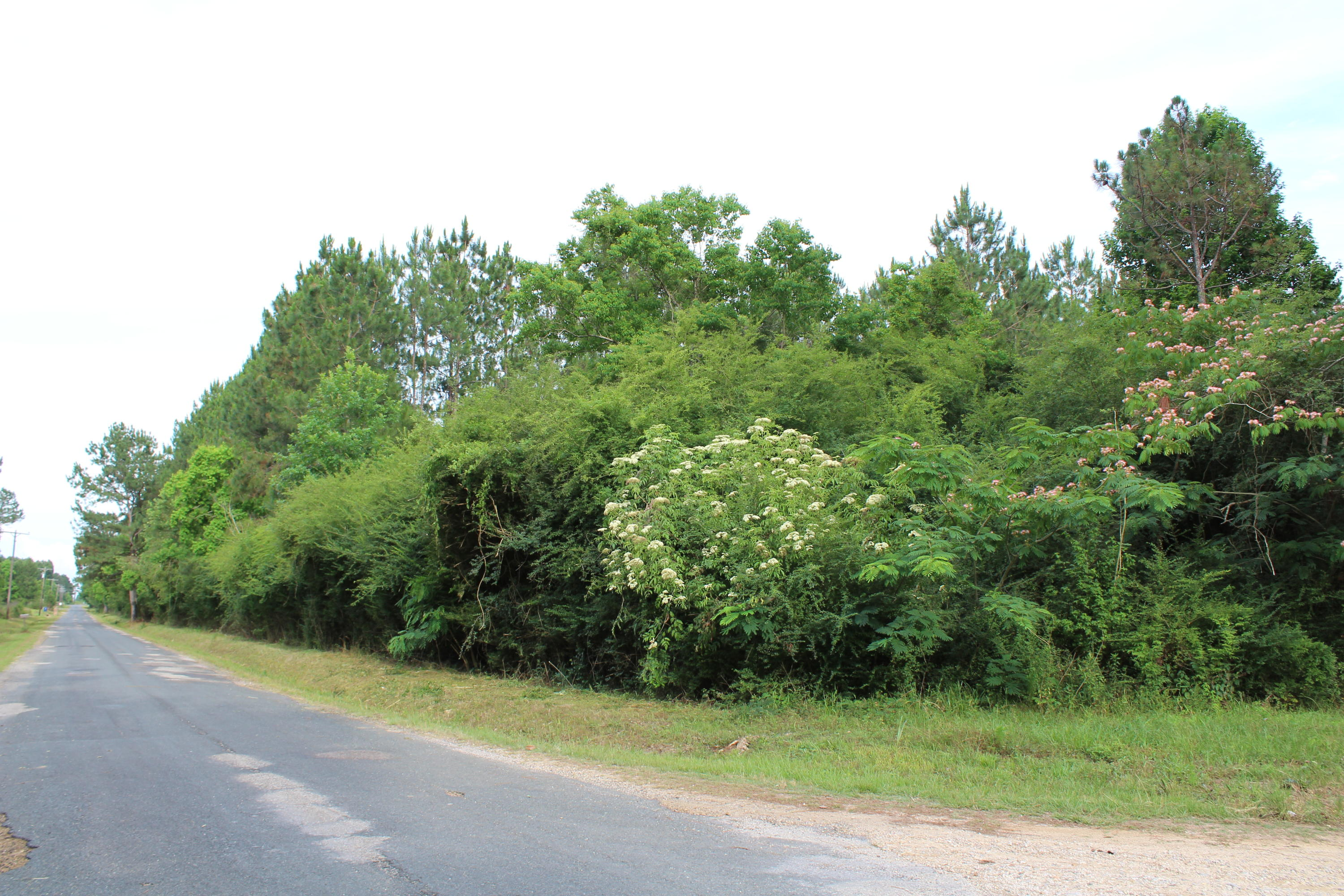 DeRidder land for sale,  Maul Rd., TBD, DeRidder LA - $320,000
