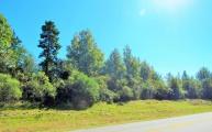 Leesville land for sale,  PHYSICAL TBD; HWY. 28, Leesville LA - $830,000