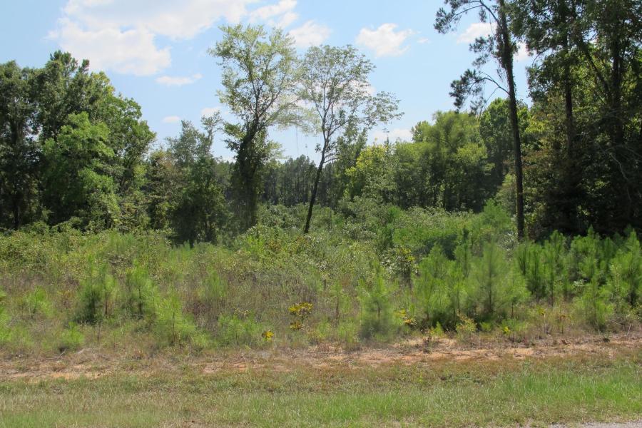 Leesville land for sale,  TBD (Lot 2) Section Line Rd, Leesville LA - $14,500