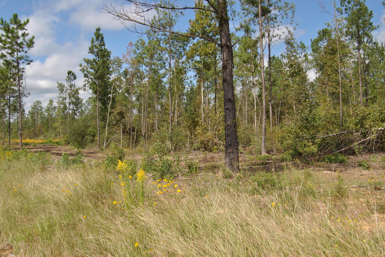 Reeves land for sale,  TBD Camp Pearl Loop North, Reeves LA - $63,000