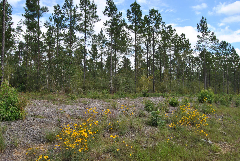 Reeves land for sale,  TBD Camp Pearl N, Reeves LA - $77,750
