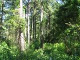DeRidder land for sale,  TBD HWY 171, DeRidder LA - $153,000
