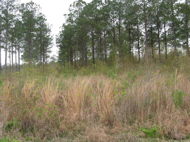 DeRidder land for sale,  TBD HWY 27 LOT 4, DeRidder LA - $37,500