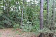 Hornbeck land for sale,  TBD, Hornbeck LA - $198,000