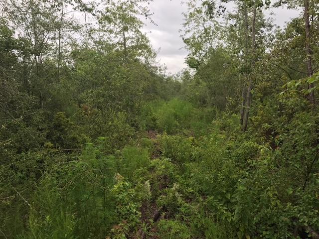 DeRidder land for sale,  TBD Hwy 27, DeRidder LA - $62,500