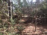 Hornbeck land for sale,  TBD Hwy 392, Hornbeck LA - $54,400