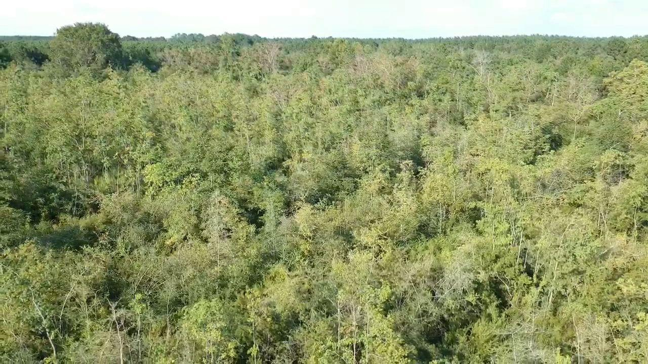 DeRidder land for sale,  TBD Hwy. 27, DeRidder LA - $62,500