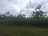 DeRidder land for sale,  TBD Hwy. 27, DeRidder LA - $62,500