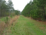 DeRidder land for sale,  TBD LITTLE HAPPY LANE Lot 70, DeRidder LA - $76,950