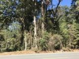 DeRidder land for sale,  TBD La-112, DeRidder LA - $49,900