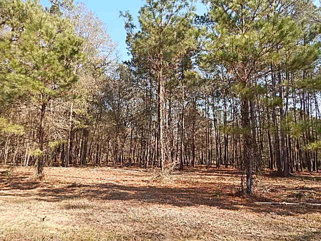 DeRidder land for sale,  TBD MAGNOLIA LOOP, DeRidder LA - $24,900