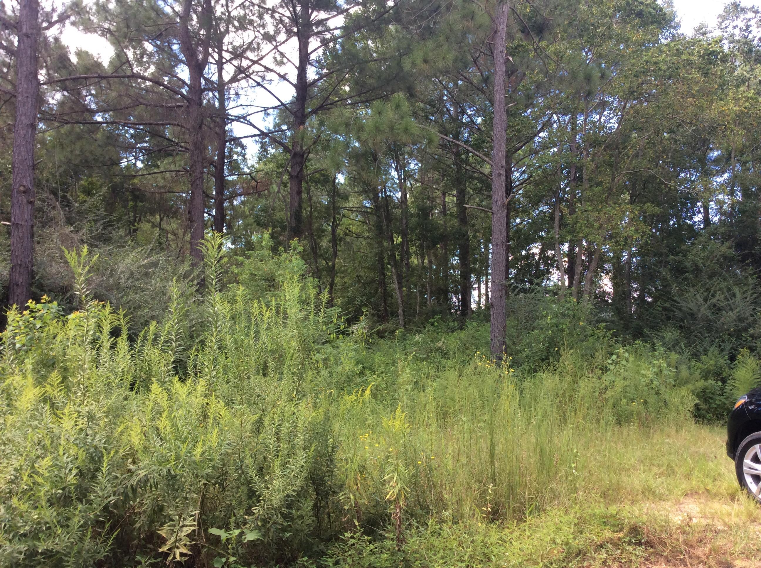 DeRidder land for sale,  TBD PLANER MILL, DeRidder LA - $87,500
