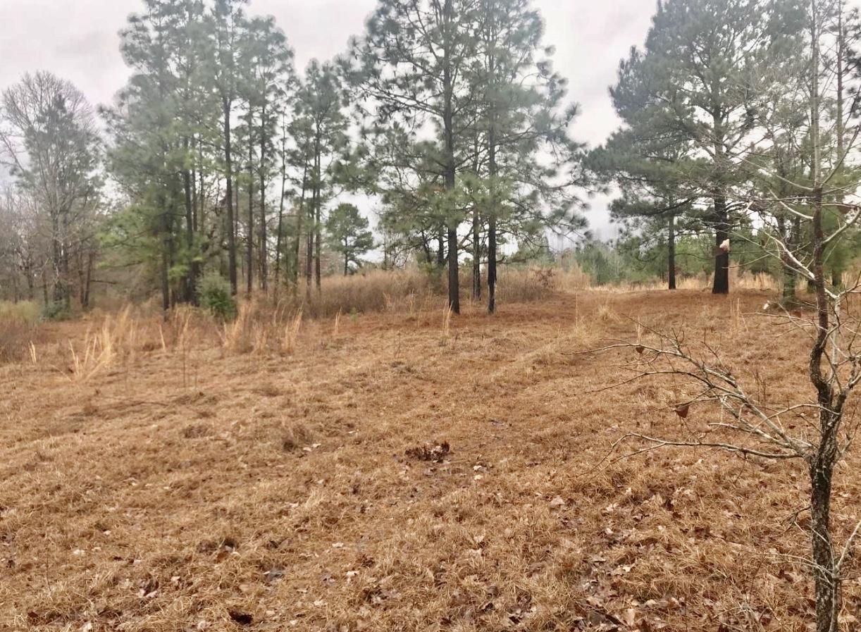 Pitkin land for sale,  TBD, Pitkin LA - $320,000