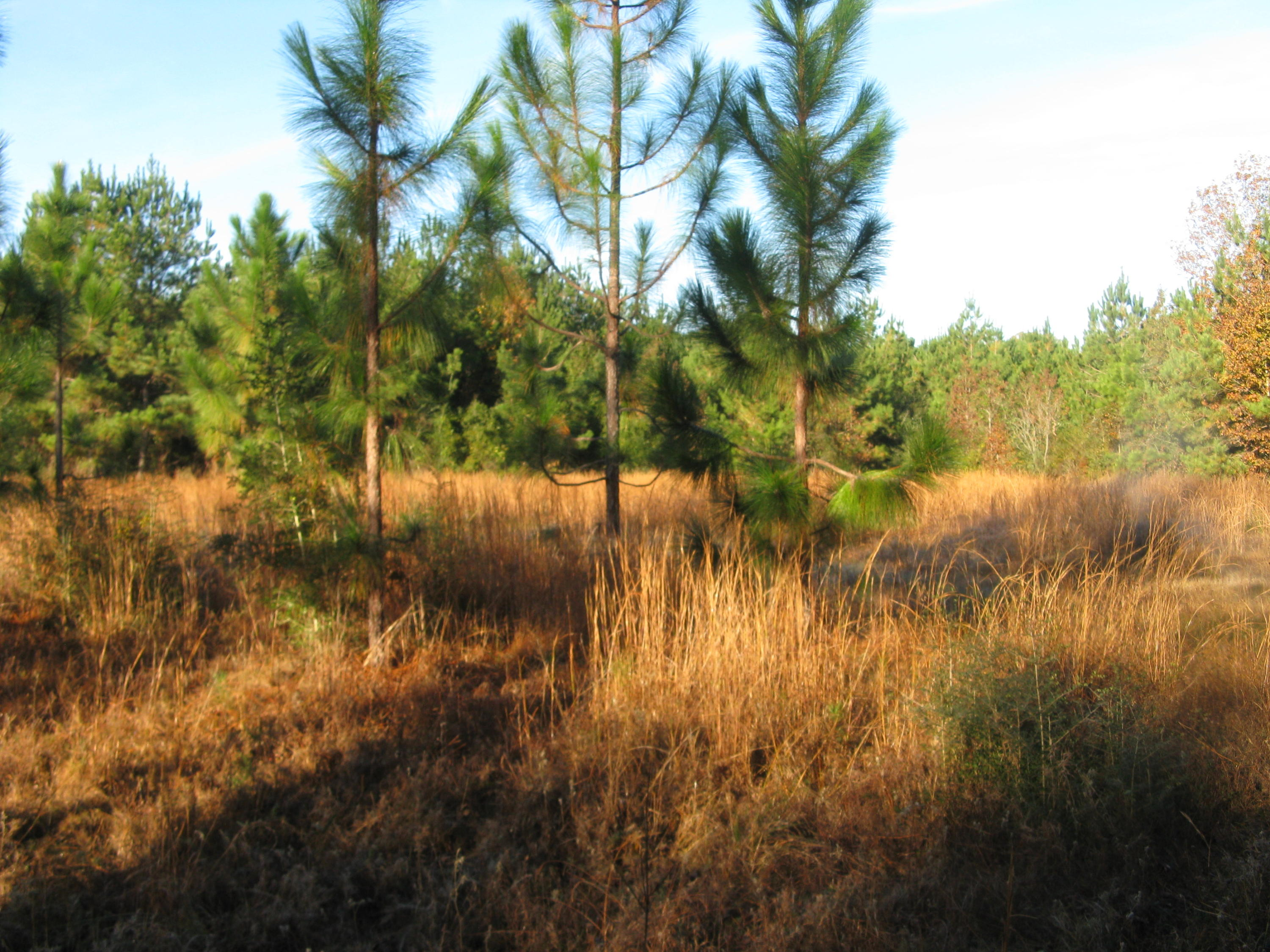 DeRidder land for sale,  TBD RUTHERFORD RD, DeRidder LA - $197,500