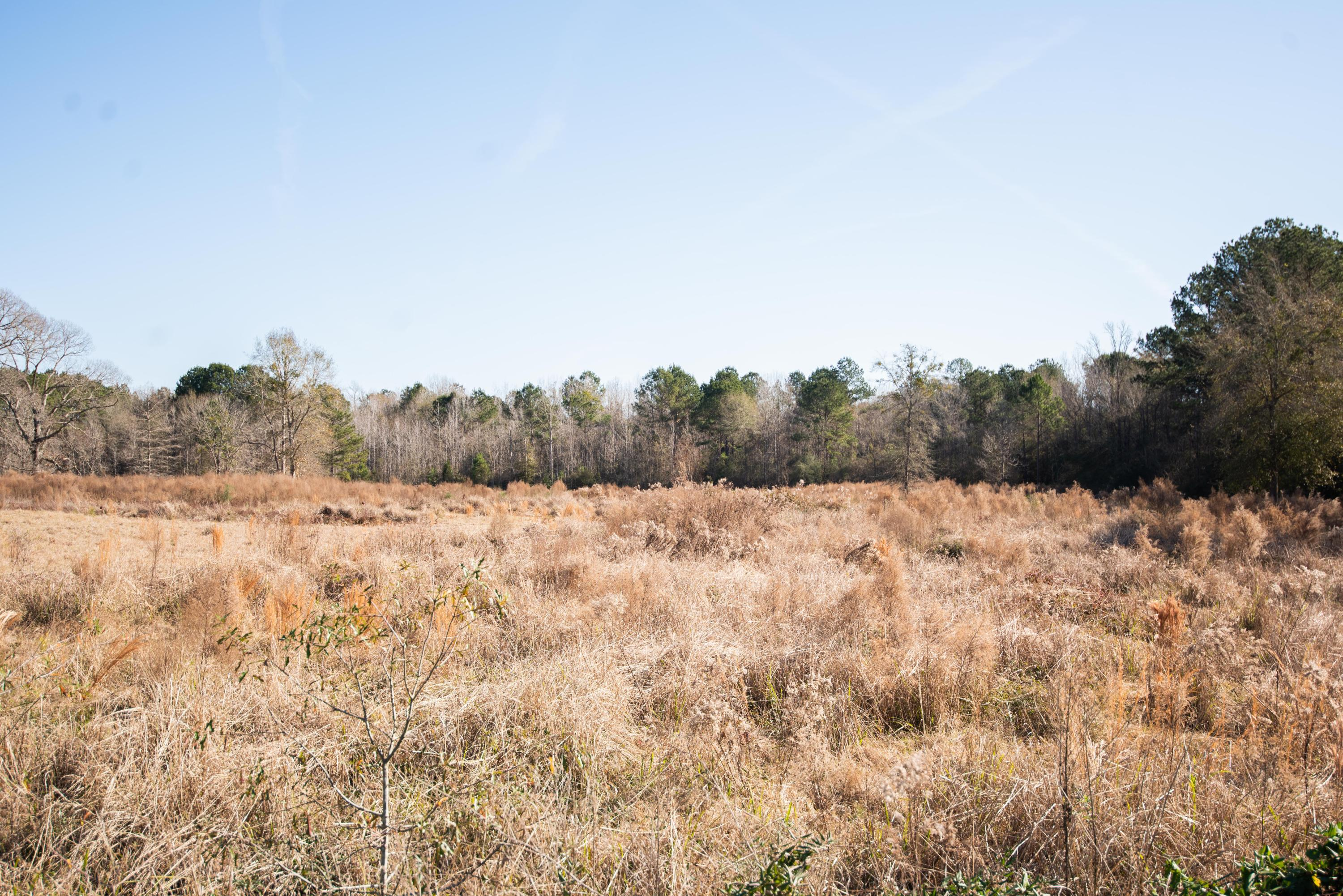 DeRidder land for sale,  Virgil Sims Rd, DeRidder LA - $83,000